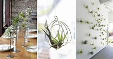 Home Decor Ideas Plants by 6 Creative Ideas For Displaying Air Plants In Your Home