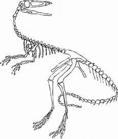 velociraptor dinosaur skeleton coloring page dinosaurs