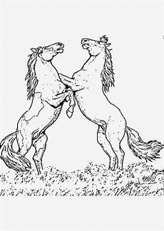 pferde ausmalbilder kostenlos bilder zum ausmalen bekommen