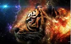 Gambar Wallpaper Harimau Api Gambar Wallpaper