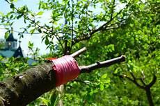Obstbäume Pflanzen Wann - obstb 228 ume veredeln 187 wann ist der beste zeitpunkt