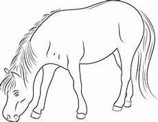 ausmalbild pferd im zoo zum ausdrucken
