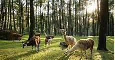 Asyiknya Berinteraksi Dengan Hewan Liar Di Taman Safari Ii