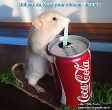 Comment Se D 233 Barrasser Des Rats Utilisez Du Coca Cola
