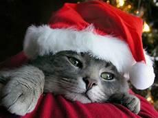 country and western christmas decor seasonchristmas com merry christmas