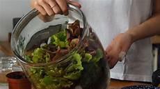 flaschengarten tipps zum anlegen bepflanzen plantura