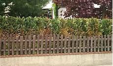die hecke natuerlicher zaun und hecke oder zaun und welche alternativen