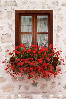 fioriere per davanzale finestra paparazzi window nel 2019 finestre fiorite fioriere