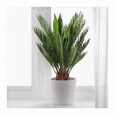 große pflanzen fürs wohnzimmer m 246 bel einrichtungsideen f 252 r dein zuhause ikea merkliste palmen pflanzen en deko