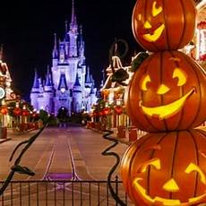 Decorations Disneyland by Disney World Popsugar Pets