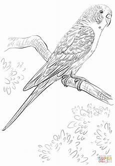 Ausmalbilder Wellensittich Ausdrucken Ausmalbild Wellensittich Papagei Ausmalbilder Kostenlos