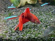 mein aquarium ein aquarium richtig einrichten und