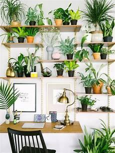 große pflanzen fürs wohnzimmer trend 2017 pflanzen shelfie in 2019 pflanzenregale pflanzenwand und pflanzen f 252 r innen