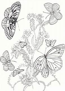butterflies and flowers drawing at getdrawings free