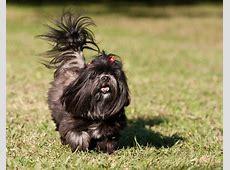 10 Raças Populares de Cachorro Pequeno   Geração Pet