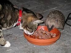 Was Essen Mäuse In Der Natur - tier und natur igel