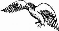 kinder malvorlagen adler adler in der luft ausmalbild malvorlage tiere