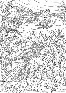 coloring pages for adults sea animals 17312 turtles printable coloring pages from favoreads