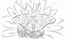 Malvorlagen Blumen Pdf Ausmalbilder Schmetterling Mit Blume Neu Malvorlagen