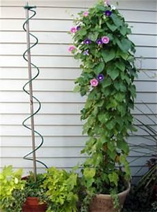 Rankhilfen Für Kletterpflanzen - bio green aufzuchtartikel rankhilfe f 252 r kletterpflanzen