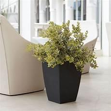 vasi arredo design 29 best images about vasi per piante on logos