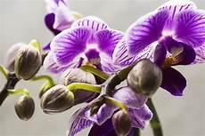 immagini fiori orchidee orchidea orchidee fiori 183 foto gratis su pixabay