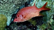 Gambar Gambar Ikan Yang Cantik 47 Foto Glmour Gallery