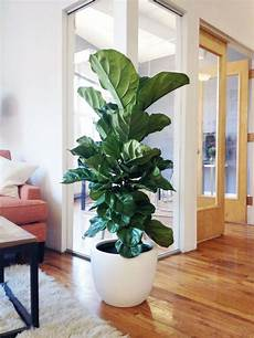 table top picks 8 plants for your office life x the sill indoor plants plant decor office