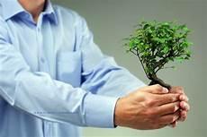 Welche Pflanze Produziert Am Meisten Sauerstoff - b 252 ropflanzen tipps und tricks zur b 252 rogestaltung
