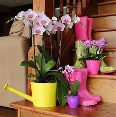 orchideen deko ideen deko mit orchidee aequivalere