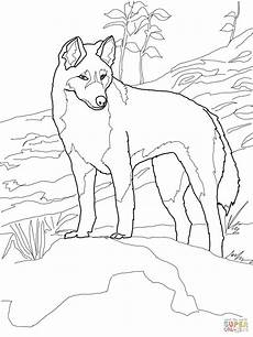 australia animals coloring pages 16900 dingo from australia coloring page supercoloring coloring page animal drawings
