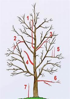 obstbaumschnitt obstbaumschnitt baum schneiden und