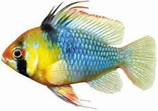 aquarium fische pflanzen de dein ratgeber rund um die