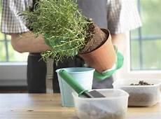 pflanze der woche ausgefüllt zimmerpflanzen umtopfen mein sch 246 ner garten