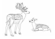 Ausmalbilder Tiere Rehe Malvorlage Reh Hirsch Malvorlagen Ausmalen Wilde Tiere