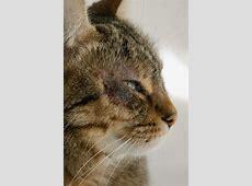 Cat skin problem stock image. Image of rash, diseases
