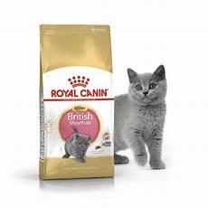 кошки royal canin роял канин kitten shorthair