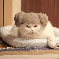 cat hair these 100 cat hair cat hats by ryo yamazaki are going viral