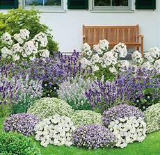 Pflanzen Günstig - bienenfreundliches staudenbeet 21 pflanzen garten