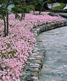 Blumen Sonniger Standort - sch 246 ne blumen f 252 r sonnige langbl 252 hende gartenbeete