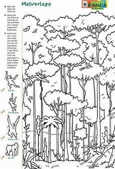 malvorlagen urwald pdf kinder zeichnen und ausmalen