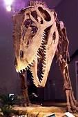 Giganotosaurus Giganotosaure  Article Sur Ce Dinosaure
