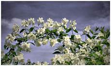 fiori d arancio significato forever wedding planner il significato dei fiori dalla a
