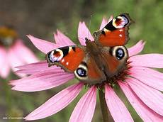 Malvorlagen Schmetterling Xing Webdesign Bremen Oldenburg 187 Schmetterlinge