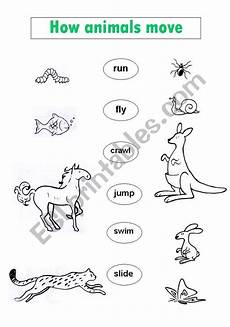 animal movements worksheet for grade 3 14399 50 best pollination images images on plant plants and avocado