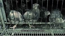 in gabbia basta quaglie in gabbia