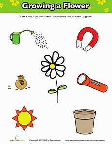 what plants need worksheets grade 13590 how does a flower grow worksheet education