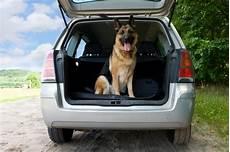 bu 223 geldkatalog tiere im auto transportieren