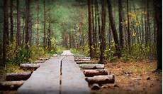 Gambar Pemandangan Pohon Alam Gurun Menanam Sinar