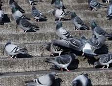 Tauben Vom Balkon Vertreiben So Funktioniert S